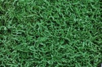 SizzlePak Green